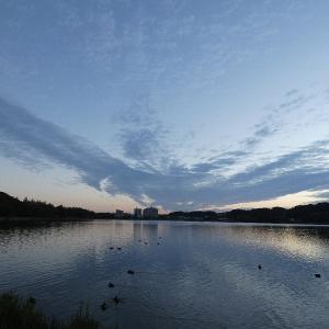 11月30日の佐鳴湖畔 冬が来る