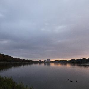 12月2日の佐鳴湖畔 カワウ走る朝