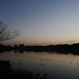 1月15日の佐鳴湖畔 昼は暖かく