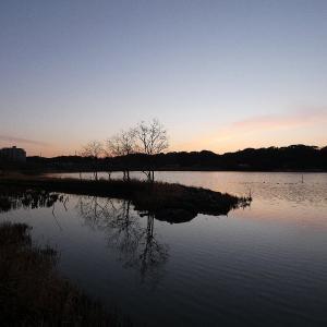 1月26日の佐鳴湖畔 まだ日の出は遅く
