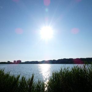 6月15日の佐鳴湖畔 晴れた朝