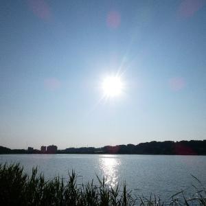 6月24日の佐鳴湖畔 雨上がりは鳥影薄く