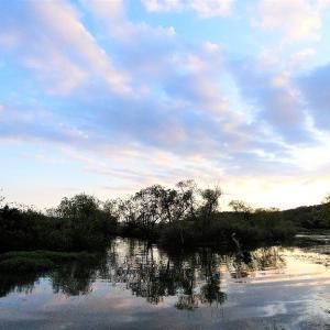 9月15日の佐鳴湖畔 葦刈り進む