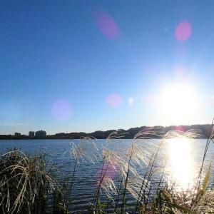 9月27日の佐鳴湖畔 秋晴れの一日