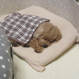 愛犬に薬を飲ませて寝てもらう、という事
