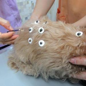 RUIさん鍼灸治療を受ける