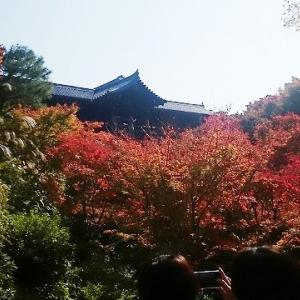 東福寺さんへ紅葉狩りに。③