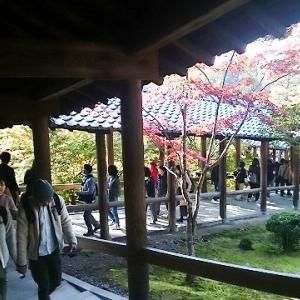 東福寺さんへ紅葉狩りに④