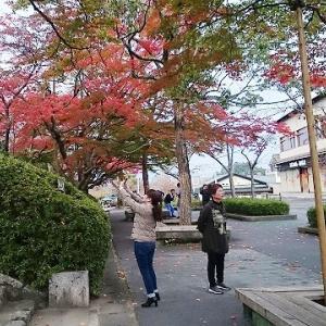 石山寺お山全体が紅葉っていました。