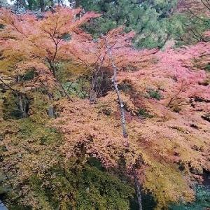 石山寺のお山が紅葉ってました。③ 天然記念物硅灰石(けいかいせき)