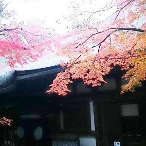 石山寺のお山が紅葉ってました⑤(もみじ)