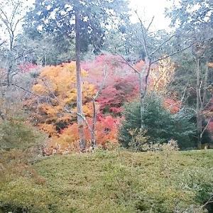 石山寺のお山が紅葉ってました⑩(もみじに魅せられて)