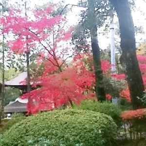 石山寺のお山が紅葉ってました⑪(もみじに魅せられて)