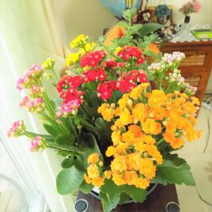今朝の花色・色々