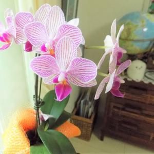 「お早うございます」朝のお花鑑賞です。