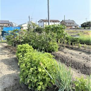 家庭菜園、給水タイム