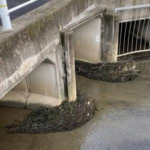 今朝も一汗かきかき、隣接河川のゴミ掃除