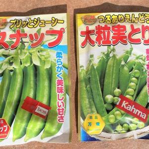 エンドウ豆・スナップエンドウを蒔いてきましたよ。