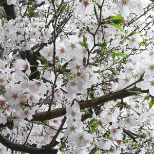 【食育日記】3/30No.1033♡具だくさんカレー♡今朝の筆文字No.563「欲と道理と良心」