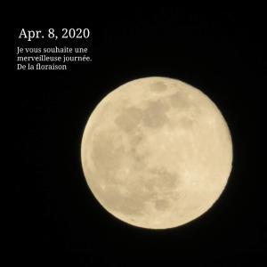 【月の暦】4月8日は、2020年最大の満月「スーパームーン」