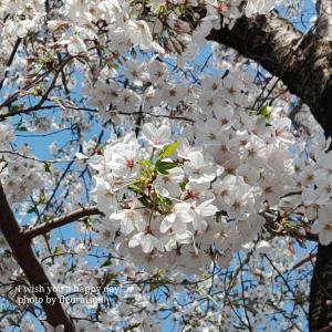 【春休み】さくらとお月さま、スタバのコーヒー豆