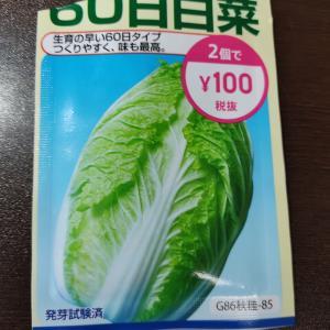 白菜のタネをまきました。