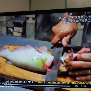 日本にも ナマズの蒲焼きってあったんだ、