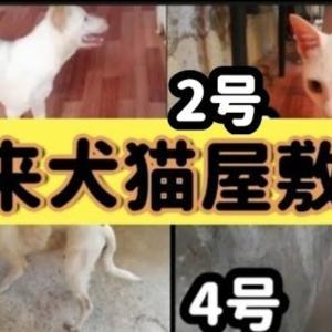 Keina農場に野良犬猫が集まって来て 大変なことに…