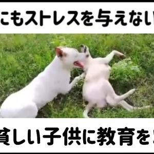 貧しい子供に教育を…野良犬に餌を…家畜にはストレスを与えない飼育を!
