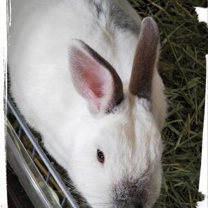 フリーの一年間⑨(*^▽^)and♨️畑のネギ