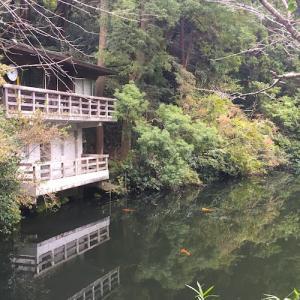 初冬の鎌倉湖(散在ヶ池森林公園)