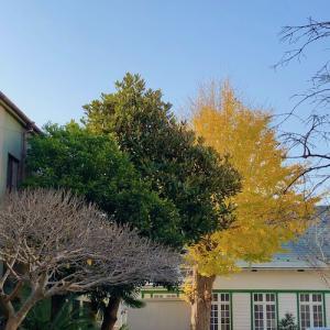 鎌倉 雪ノ下・旭屋本店(豆大福)