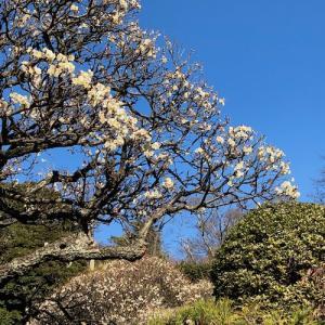 北鎌倉・立春の明月院