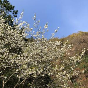 春分のころ