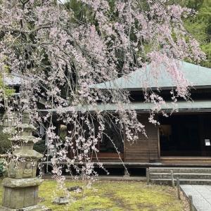 北鎌倉・東慶寺 弥生の風景