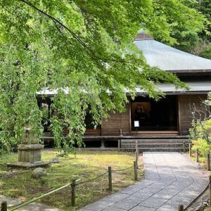 北鎌倉・東慶寺 卯月の風景