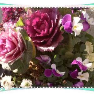 花言葉は 祝福・利益等&今日は愛妻の日♪