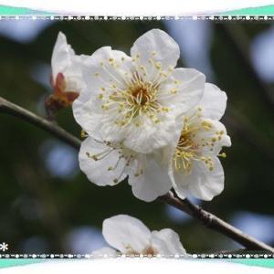 今日は苗字制定記念日&春のように♪米^-^米