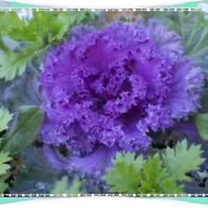 今日は歌舞伎の日&花壇の花♪米^-^米