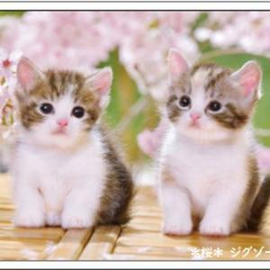 今日は猫の日&花言葉は合格等♪