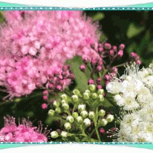 お散歩途中の花&今日は住宅デー&地震☆彡