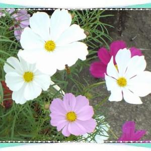 可憐な花が風に揺られて&今日はテディベアの日☆彡