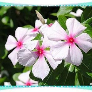今日は牛タンの日&花壇の花♪d(゚▽゚*)b