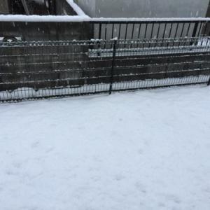 山口市は雪。と、糖質制限継続中。