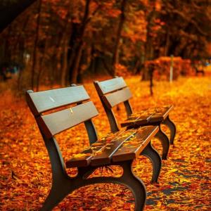 爽やかな秋はどこへ行った~10月の湿度が70%