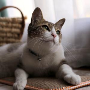 高尾山と猫な週末