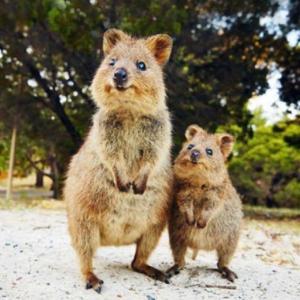 珍しい動物の写真をお届け♬