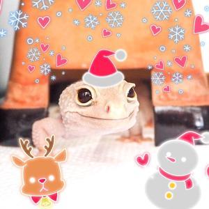 1日遅れのメリークリスマス