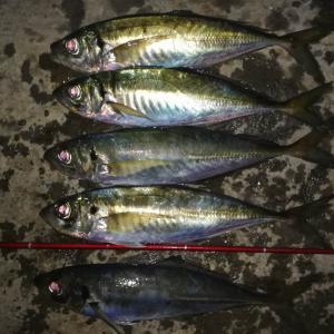 2019.12.20.三浦の磯で釣り納めのカゴ釣り。ギガアジに届かず残念‼