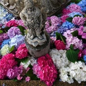 宇治あじさい寺三室戸寺の紫陽花 マスクでお出かけはやばかった